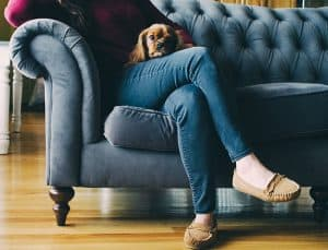 dog hair cleaning ideas that you can share
